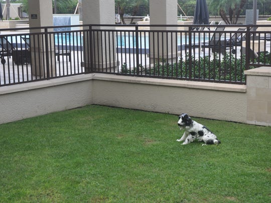 This dog park is on the roof of Mercato in North Naples.