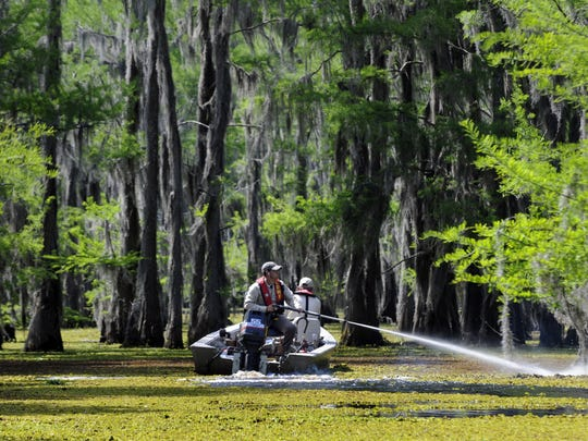 One of 18 boats working with The Louisiana Department of Wildlife and Fisheries Inland Fisheries Division spray the second round of herbicide on giant salvinia on Lake Bistineau April 30, 2008. . Jim Hudelson/The Times
