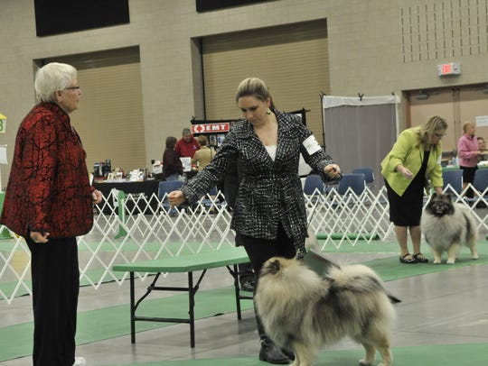 Beverly Capstick judges Keeshonds at the Granite City
