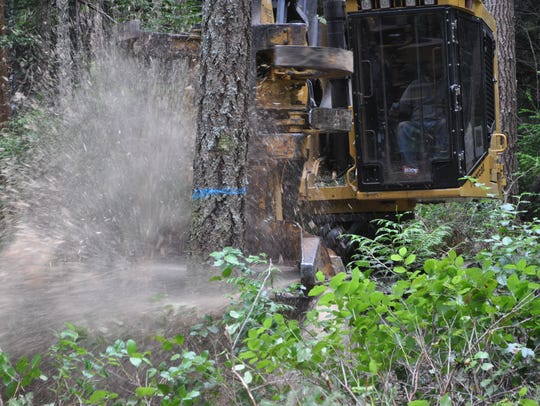 A tree harvester cuts a Douglas fir in Newberry Hill
