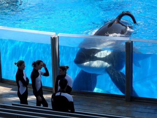 Tilikum AP orca