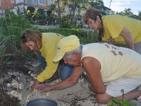 Turtle Time volunteers inspect the sand on Bonita Beach. They devote time to ensuring the survival of loggerhead hatchlings.