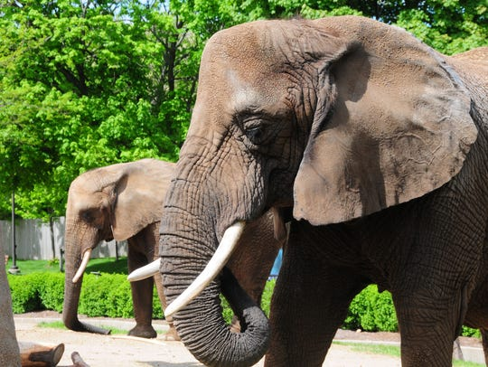Elephants finally have their day at the Milwaukee County