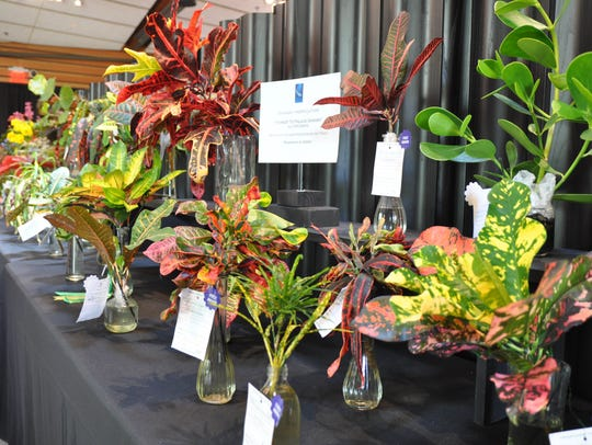 Horticulture sits on display at last year's annual