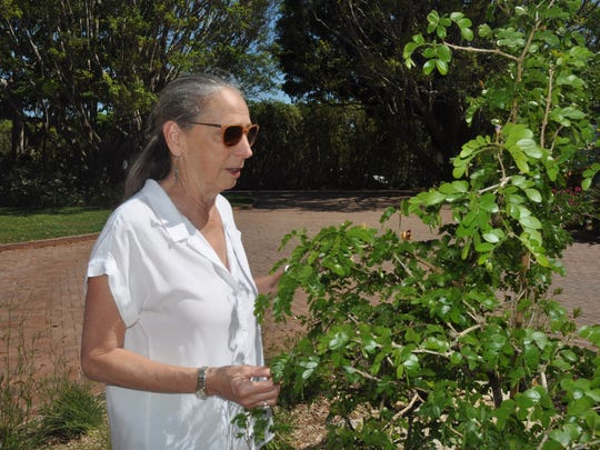Lois Kelley loves her new native vegetation around her Port Royal home.