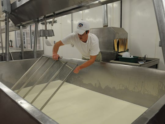 Jon Metzig slices the cheese which will make the curd for a European-style cheese he is making at Willow Creek Cheese in this 2010 photo.