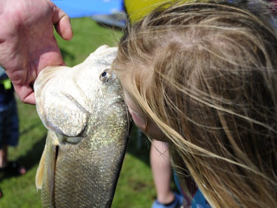 Delaney Jones, 6, kisses a large sheepshead  during the kids fishing contest Saturday, June 30, 2018, at the Algonac Pickerel Tournament.