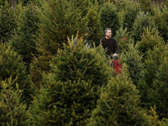 A man searches for a Christmas tree with family and friends at BJ's Christmas Tree Farm in Pleasant Valley.