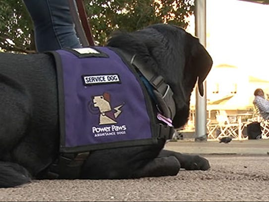 Current state laws only allow dogs and miniature horses to be service animals.