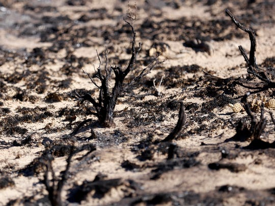 Scorched land is pictured on Wednesday about 20 feet from the site of a fire that broke out at a WPX Energy oil production site in Nageezi.