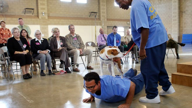 Ron Khneiser shows off Duckie while doing push-ups at Valley State Prison near Chowchilla on Oct. 28. Khneiser trained Duckie, as part of an inmate rehabilitation program. Inmates say the new prison program rehabilitating shelter dogs is helping them, too.