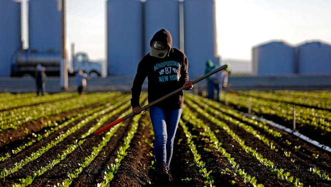 Agricultural worker Alicia Solano thins rows of lettuce near Salinas in March 2017.