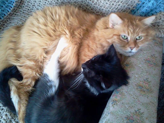 In honor of Hug a Cat Day we asked readers to submit photos of their feline friends. Pooky and Butters, submitted by Chris Jones.