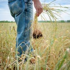 I'm a farmer who wants fair trade, but Trump's tariffs shake future of US agriculture