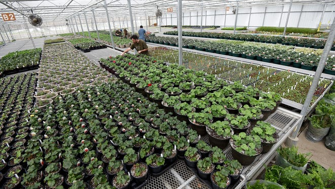 Preparations were under way on Thursday for the re-opening of Possum Run Greenhouse.