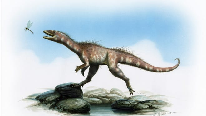 A reconstruction of the Dracoraptor by artist Bob Nicholls.