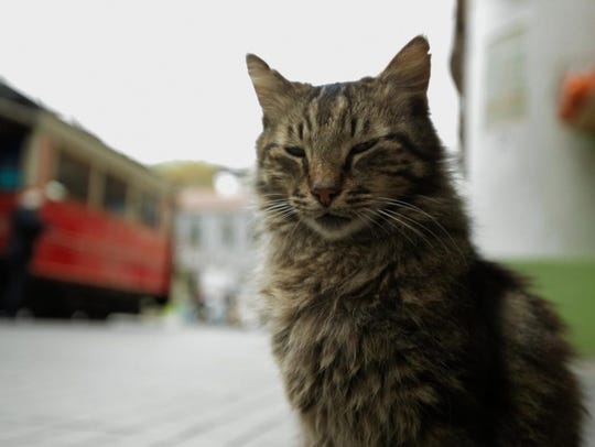 """The cats of Istanbul star in the new documentary """"Kedi."""""""