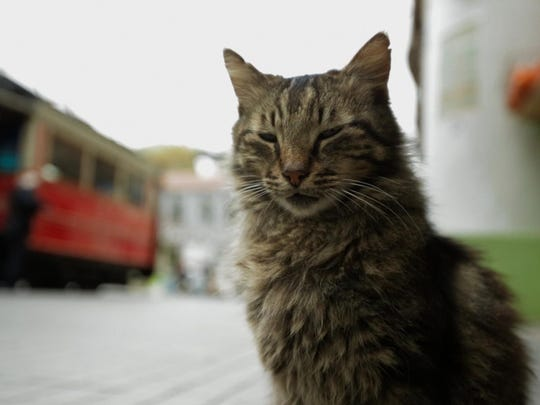 "The cats of Istanbul star in the new documentary ""Kedi."""