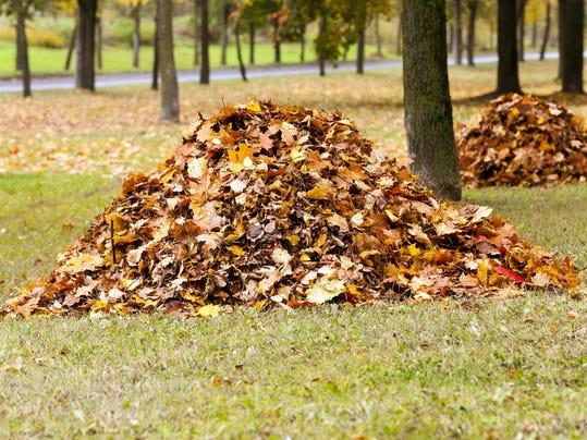 stock leaves