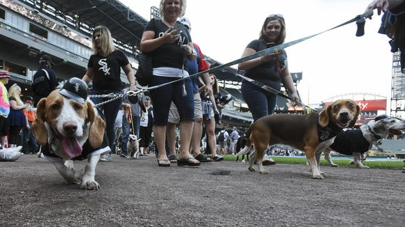 """Fans walk their dogs during """"Bark at the Park"""" at U.S."""