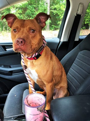Adoptable dog Scrappy enjoys a Doggie Day Out and a break from shelter stress.