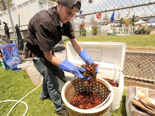 Chris Muchnick of Glendale places live crayfish into a pot before cooking them at the Lenny G's: A Taste of Louisiana booth at the Simi Valley Cajun & Blues Music Festival.