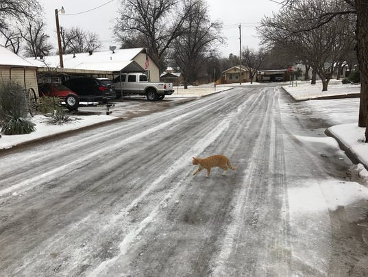 Abilene-Ice-cat-in-street.jpg