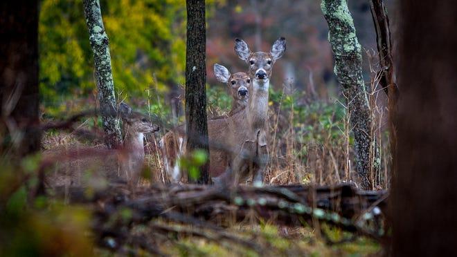 State park deer.
