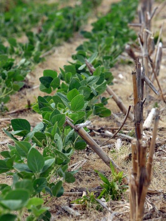MNI 0629 Drought Crops.jpg
