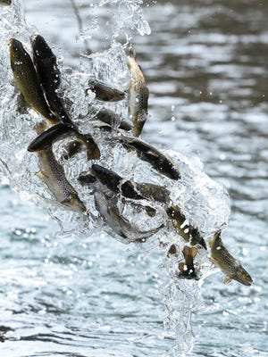 Trout stocking begins later this month in advance of the season's opening dates on April 1 and April 15.