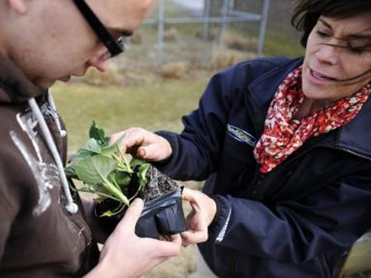 Northern Middle School agriculture education teacher Carol Richwine, right, shows eighth-grade student Kyle Clay how to remove broccoli transplants