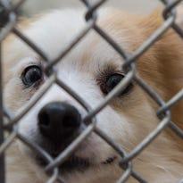 WATCH: Status update about dogs seized in Eden