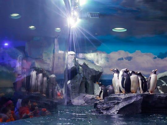 The Wonders of Wildlife Museum and Aquarium announced