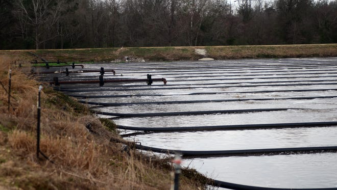 Recent measures taken at Hattiesburg's south wastewater lagoon are paying off, as the lagoon continues to meet MDEQ permit limits.
