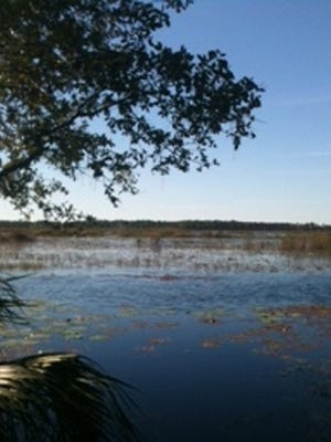 Savannas Preserve in Port St. Lucie was partially created by land purchases made through the Florida Forever fund.