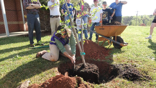 Skyland Elementary School's 16 new trees are expected to provide thousands of dollars' worth of benefits over the next 25 years, thanks to TreesGreenville and BMW Manufacturing.