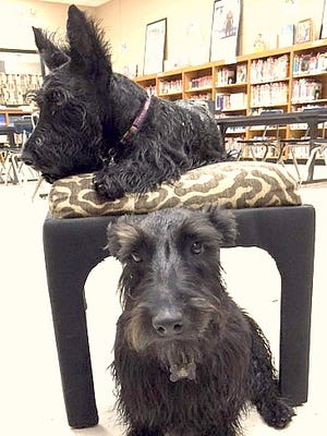 Woodrow and Fergus visit the Duson Elementary library about twice a week.