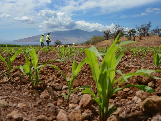 AP FOOD AND FARM GMO BAN A USA HI