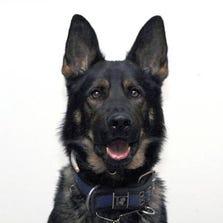 Buffalo Police K-9 officer Herc