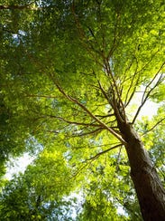Trees have some incredibly practical impacts, says