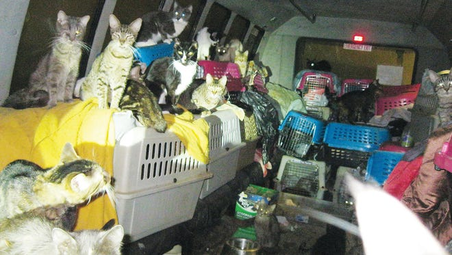 """This Sunday, Nov. 9, 2014 photo provided by the Malheur County Sheriff's Office via the Argus Observer shows scores of cats found living in a van in Ontario, Ore. The Ontario Feral Cat Project rescue group is caring for the 68 cats in what one worker described as """"a swirling mass."""" Many of the living cats were emaciated, Some had lost an eye to infection, a few were missing both eyes."""