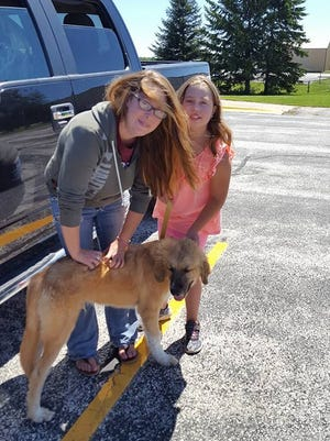 Allison Pfister and her family started out as Bear's foster family but ended up adopting him.