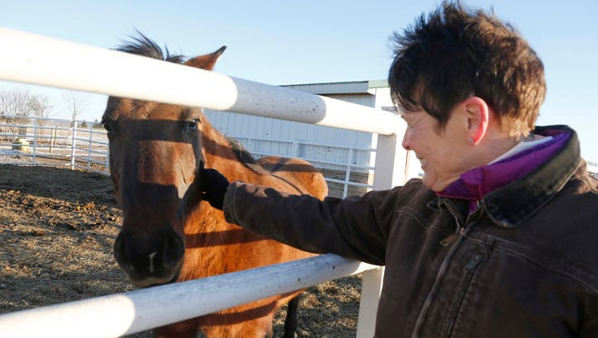 Nancy Turner, board president of This Old Horse rescue, pets a wild horse on Feb. 3, 2017 in rural Hastings, MN where dozens of wild horses have found a home. The effort to find homes for hundreds of wild horses near Lantry, in north-central South Dakota, isn't done and volunteers have been working to place horses in sanctuaries and ranches across the country.