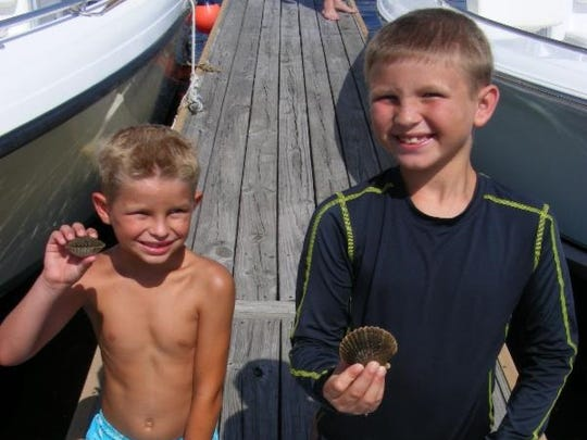 The best way to get scallops like these is to have a couple of kids like Timmy and Brennan in the water.