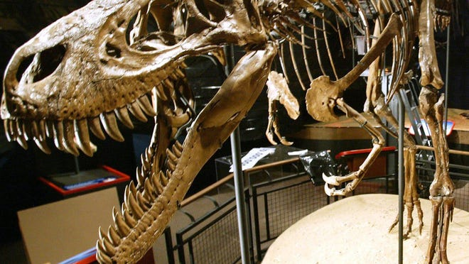 Jane, the world's most complete and best preserved juvenile T. rex, is on display at Burpee Museum of Natural History.