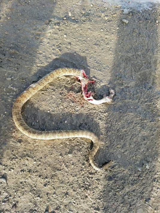 636510223742083499-snake.jpg