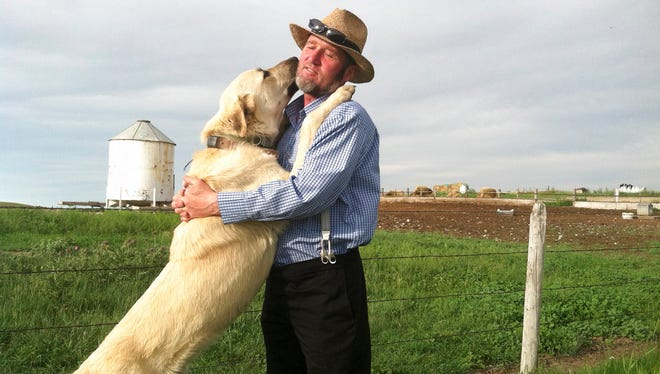 In this 2013 photo provided by the U.S. Department of Agriculture a Kangal dog greets Ben Hofer of the Hutterite Rockport Colony near Pendroy, Mont. Nearly 120 dogs from three large breeds recently completed a four-year study to see how they'd react to their old nemesis (wolves) on a new continent. The U.S. Department of Agriculture supplied Cão de Gado Transmontanos, Karakachans and Kangals that can weigh 150 pounds to guard sheep in Idaho, Montana, Wyoming, Washington and Oregon.