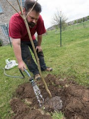 Corey Alleman plants a northern catalpa tree at Curtis Shoup's Hollywell Avenue, Chambersburg, home.