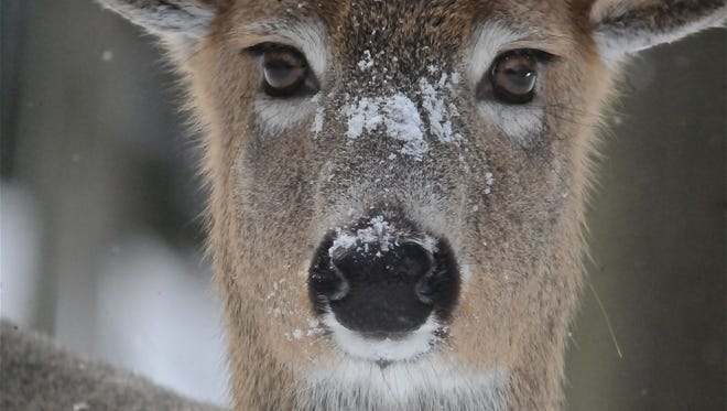 A staring contest often ensues with deer.
