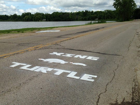 Painted silhouettes on roads warn drivers of turtle crossing areas.